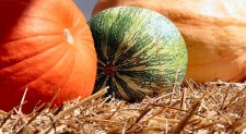 Tennessee Farms Offer Safe, Outdoor Fun This Fall