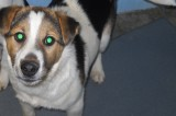 Lennox is a 5 month old male Hound/Terrier mix