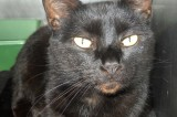 Skeeter is a 5 yr old neutered male