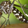 Travelers Urged to Protect Themselves from Mosquitoes