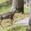 Tennessee Highway Patrol Urges Motorists to Watch Out for Deer