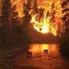 Dry Fall Increases Wildfire Risk in Tennessee
