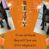 Betty is a 10-Month-Old Female Shepard/Chow Mix