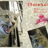 Benita is a 18-Month-Old Female Cat
