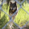 """Wolf PAWS 'Positive Awareness Wolf-dog Sanctuary' Hosts 4th Annual Fundraiser """"WolfStock"""""""