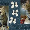 Marianne is a 10-Year-Old Female Spayed Cat