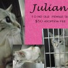 Julianna is a 10-Month-Old Female Siamese Mix Cat