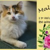 Malibu is a 1-Year-Old Female Cat