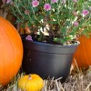 Regional Treats For Family Fall Fun Are Gearing Up In The Area