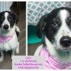 LuLu – Contact C.A.R.E. at (865) 471-5696