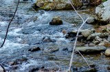 TDEC Issues Precautionary Fish Consumption Advisories for Portions of Pigeon, Nolichucky Rivers