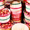 It's Apple Pickin' Time in Tennessee