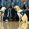 Families Receive Service Dogs Trained By Offenders