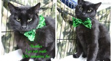 Panther – Contact C.A.R.E. at 865-471-5696