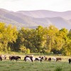 Equine Piroplasmosis Detected in 22 Tennessee Horses