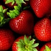 Strawberry Season Is Here and Farmers Are Ready