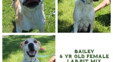 Bailey – Contact C.A.R.E. At 865-471-5696