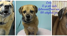 Cody – Contact C.A.R.E. At 865-471-5696