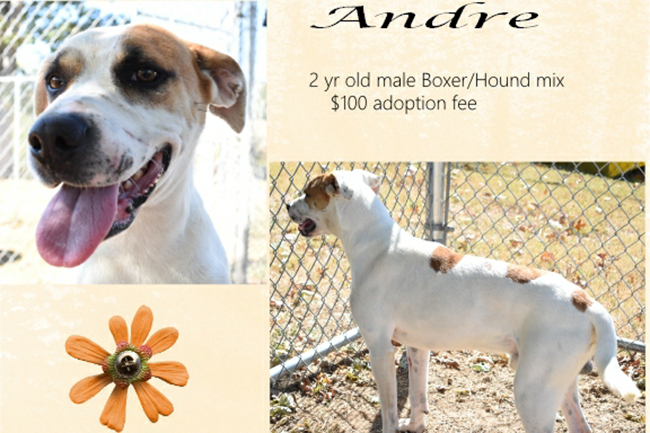 Adoptable Pets Andre 11172016