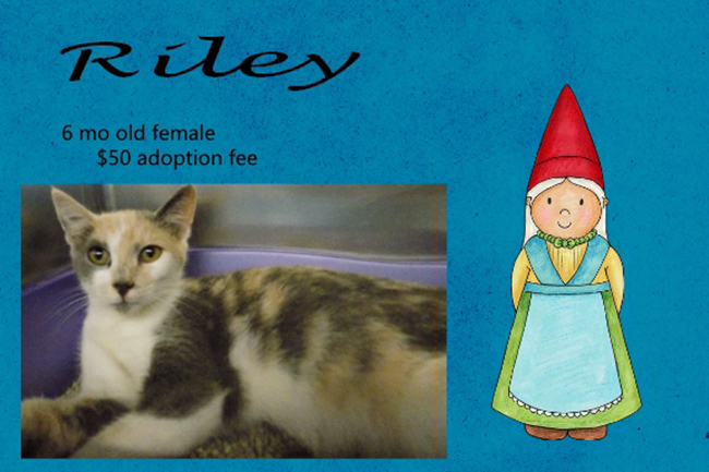 Adoptable Pets Riley 11222016
