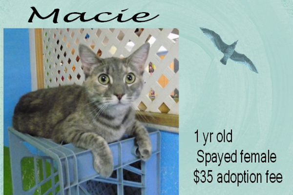 Adoptable Pets Macie Feature 12242016