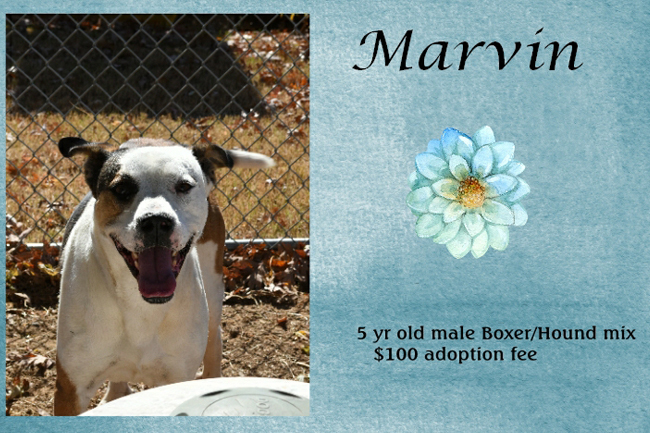 Adoptable Pets Marvin Feature 12242016