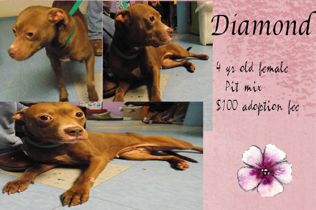 Adoptable Pets Diamond 04032017