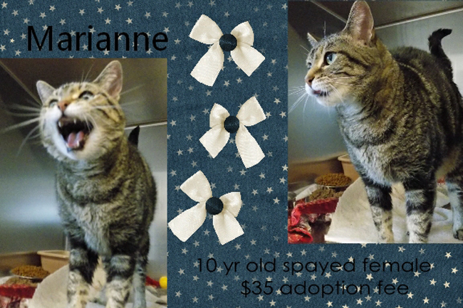 Adoptable Pets Marianne 04032017