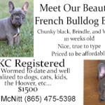 French Bulldog Puppies McNitt 12032017